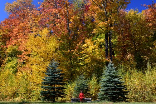 sorties amusantes et sûres dans les forêts du Vermont