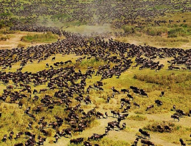 le parc national du serengeti c est quoi