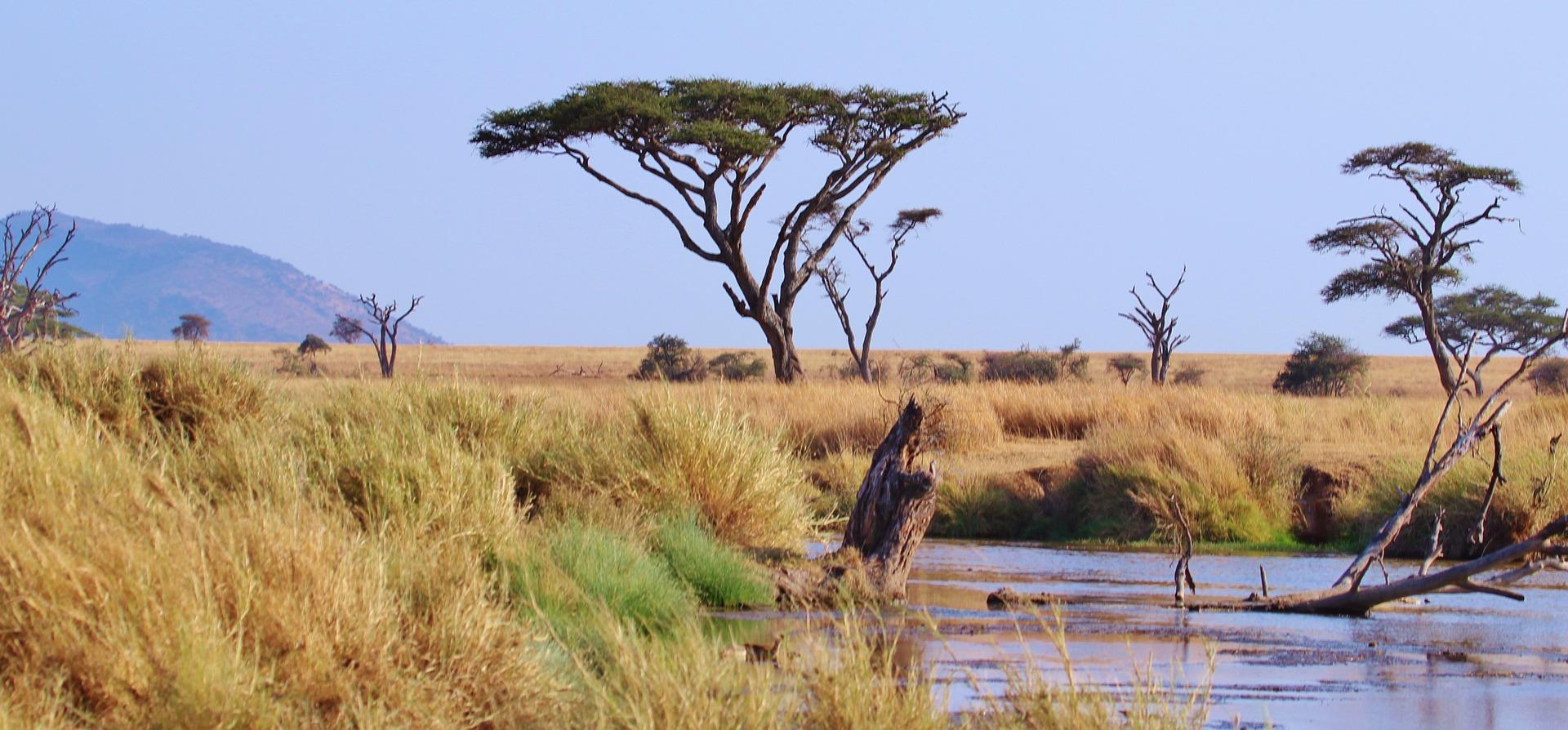 pourquoi faire un safari de luxe en tanzanie